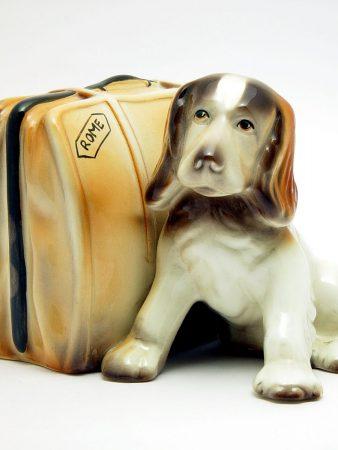 506 American Goldscheider Puppy